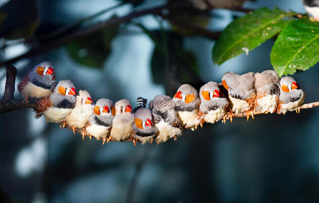 The Secret Superpower of Birds, Revealed