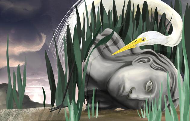 Great Egret. Illustration: Adrian Brandon