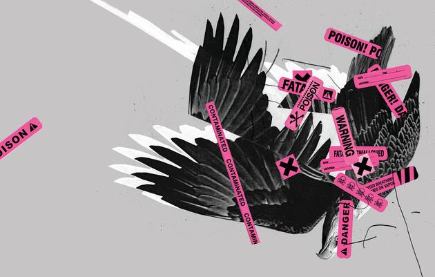 Bald Eagle. Illustration: Mike McQuade; Photo:  Anthony Goldman/Audubon Photography Awards