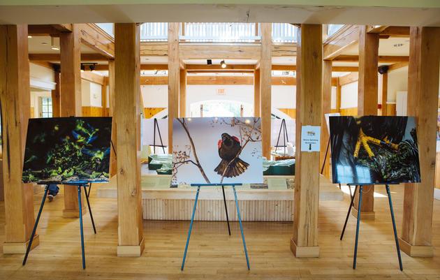 The Audubon Photography Awards Traveling Exhibition