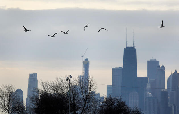 For Chicago Birders, a Christmas Day CBC Is the Perfect Holiday Tradition