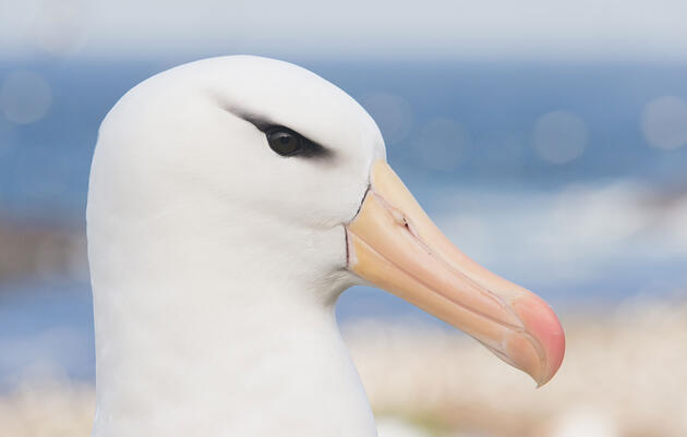 How to Photograph White Birds