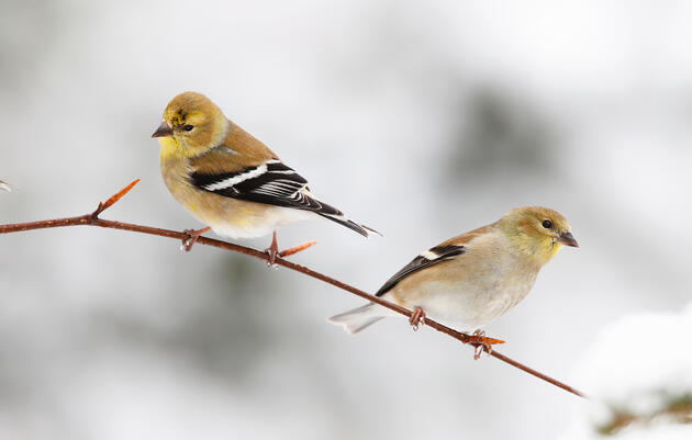 Learn the Fall and Winter Colors of These Common Bird Species