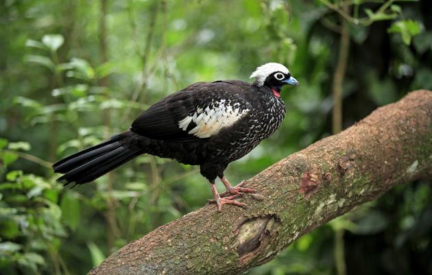 Go Discover Paraguay's Amazing Birding
