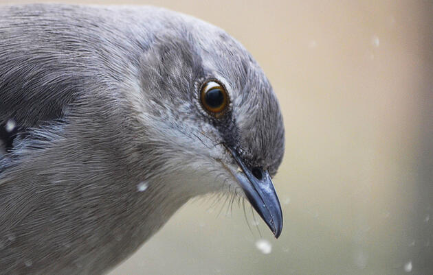 Bird Brains: They're More Complicated Than You Think