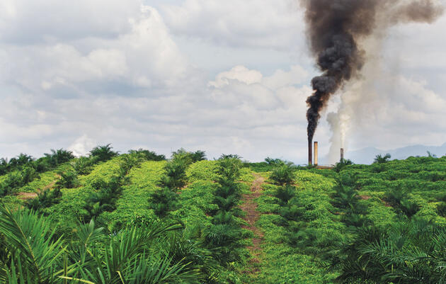 A palm oil mill in operation at a plantation in northern Sumatra, Indonesia. Global production of the oil has doubled in the past decade and is set to do so again by 2020. Paul Hilton