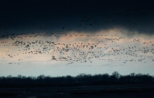 Extreme Weather Caused Chaos for This Year's Crane Tourism Season