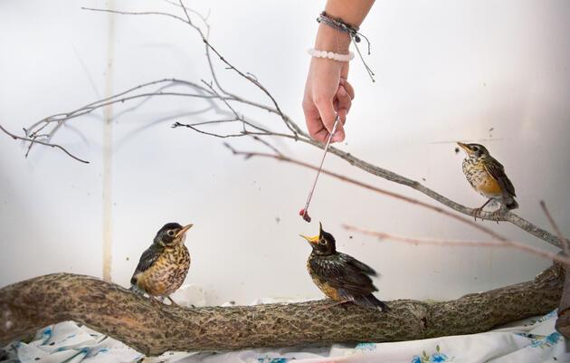 Behind the Scenes at Connecticut's Biggest Baby Bird Nursery