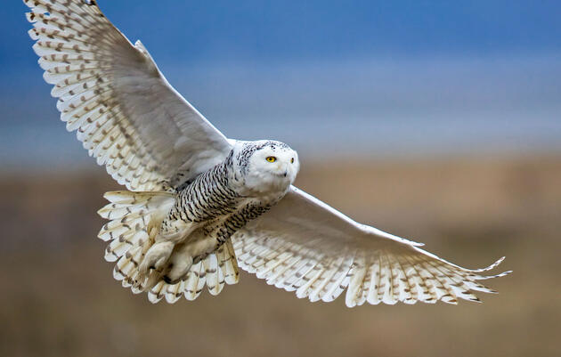 New Legislation Restores Protections for Arctic National Wildlife Refuge