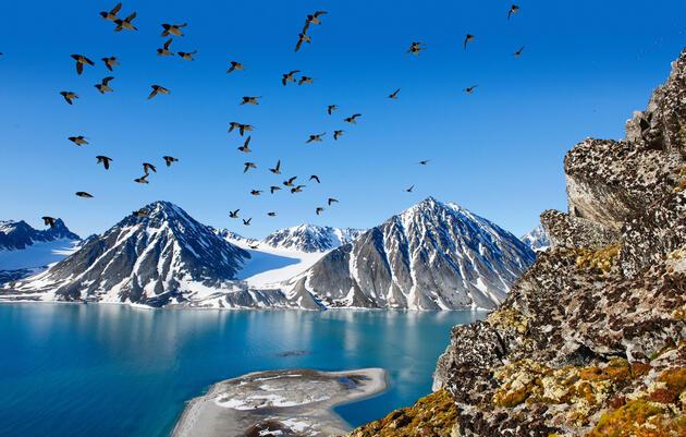 El mérgulo, una especie elemental del Ártico, ajusta su dieta de acuerdo al clima