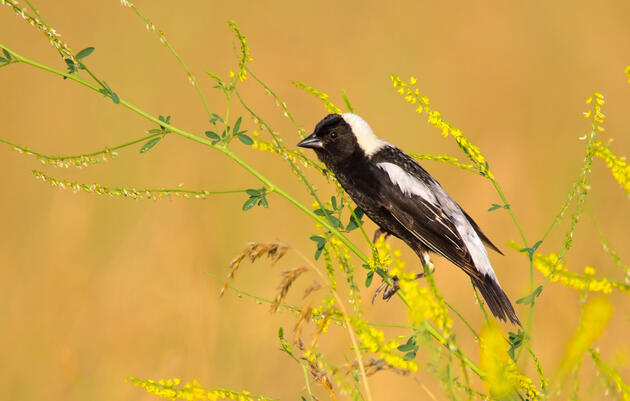 Audubon's Guide to Ethical Bird Photography