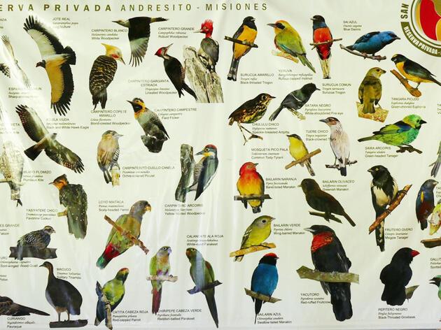 The Species List (Part 1)