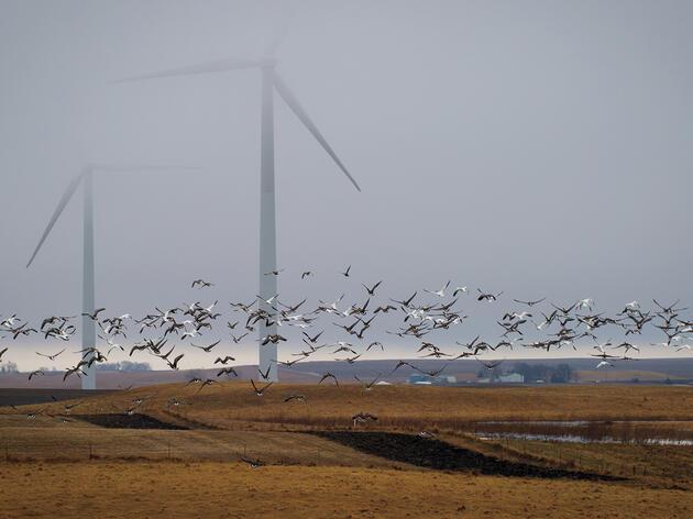 Posición de Audubon con respecto a la energía eólica