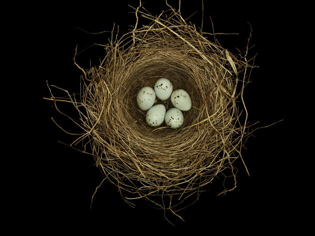 SMALL MIRACLES A look at birds' nests like you've neverseentheseminiature masterpieces.  Chipping sparrow. Mono County, California, 1959. Photography by Sharon Beals