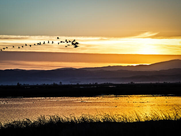 Legislature Urged to Include Resources for Birds and Watersheds in Water Bond
