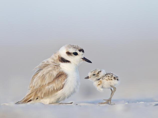 Audubon 2013 Gift Guide for Bird Lovers