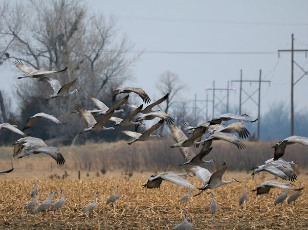 A Simple Technology Could Help Stop Birds From Colliding With Power Lines