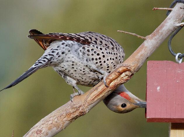 2017 Great Backyard Bird Count Summary