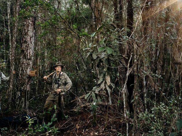 ¿Podemos encontrar el Carpintero Real en Cuba?