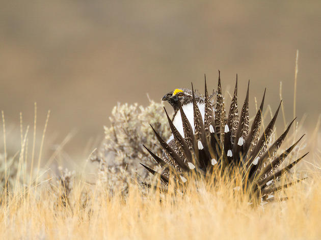 The Sage-Grouse Initiative Scores $200 Million