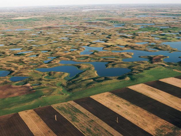Programa de políticas agrícolas de Audubon