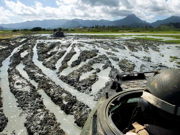 The mud tracks left by amphibious assault vehicles is just the type of habitat Black-throated Stilts need for nesting. Craig T. Kojima/Honolulu Star-Advertiser/AP