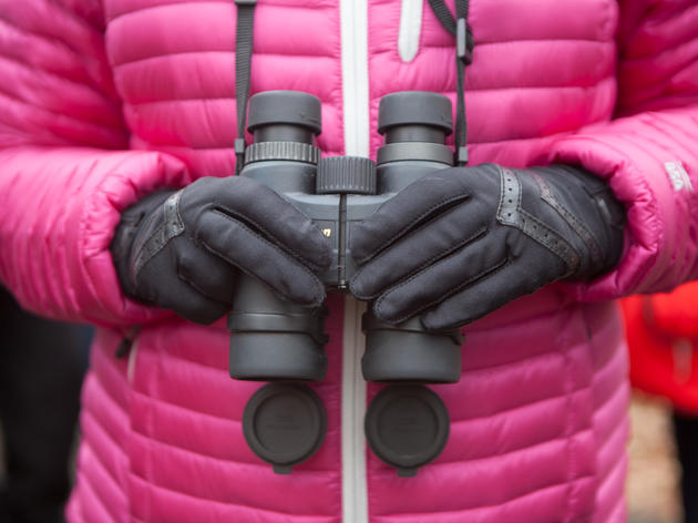 It's Time for the Christmas Bird Count