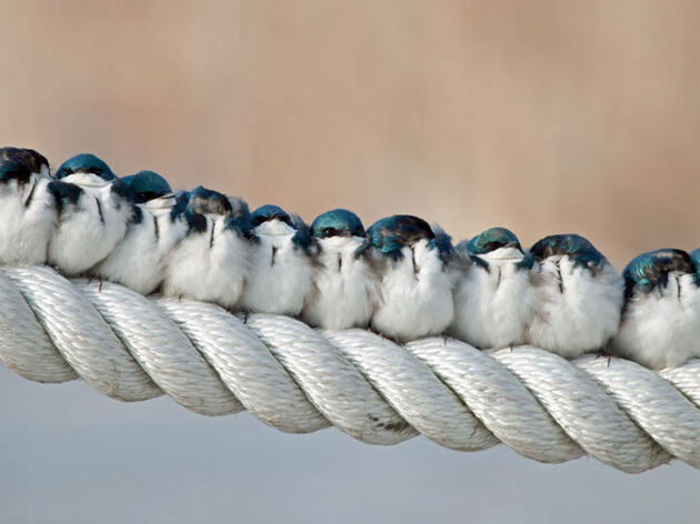 Feathered Friends for Life—or Not