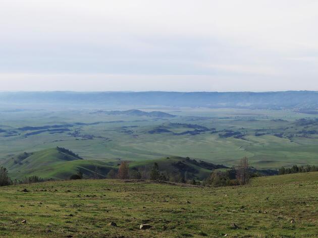 Audubon California Helps Improve Apple's Solar Farm