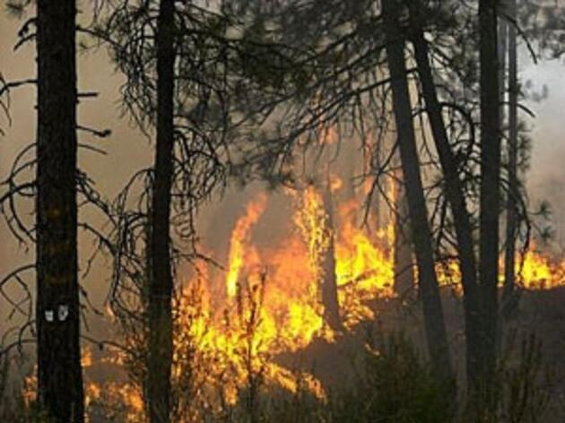 New Study Shows Wildfires are Getting Worse