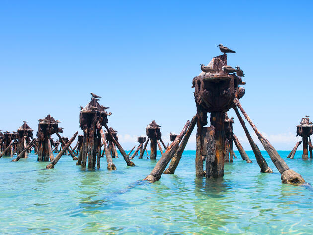 Brown Noddies perch upon abandoned pilings next to Fort Jefferson in Dry Tortugas National Park, Florida. This seven-island chain is a premier birding destination, especially in the spring. Lorraine Boogich/iStock