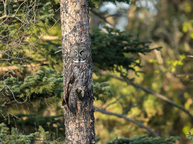 These Amazing Images Show How Good Bird Camouflage Can Be