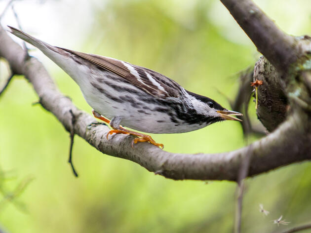 Introducing Audubon's Migratory Bird Initiative—and How You Can Help