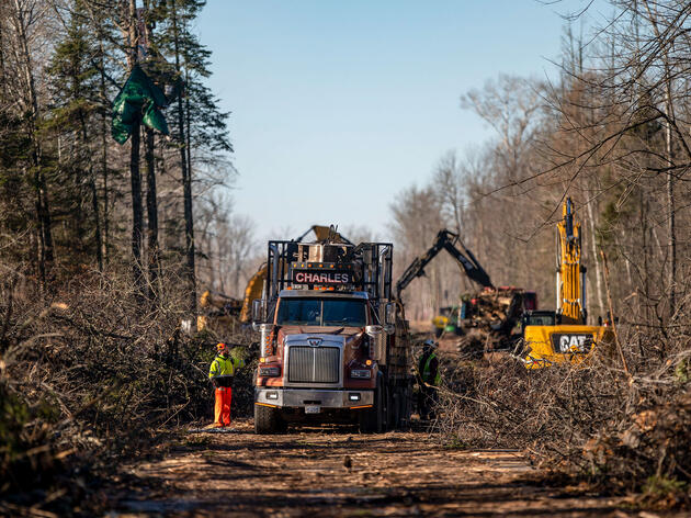 Two activists camp in the tops of trees as contractors work on clearing a strip of land on the Line 3 work site in Aitkin County, Minnesota, December 2020. Alex Kormann/Star Tribune/AP