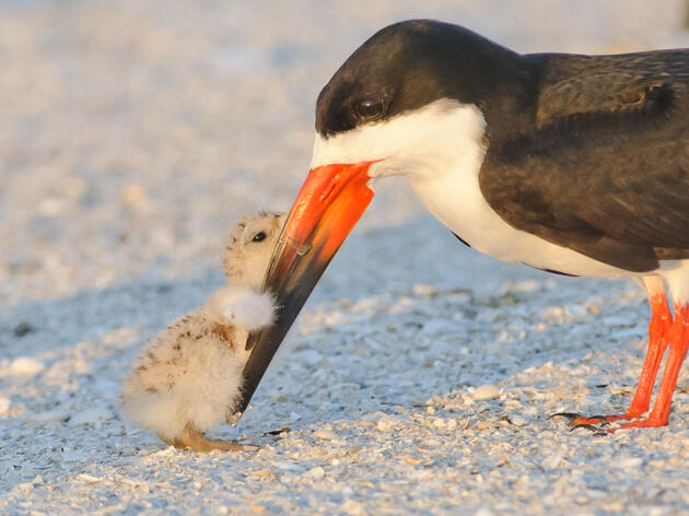 Top Audubon Wins for Birds in 2019: Programs and Initiatives