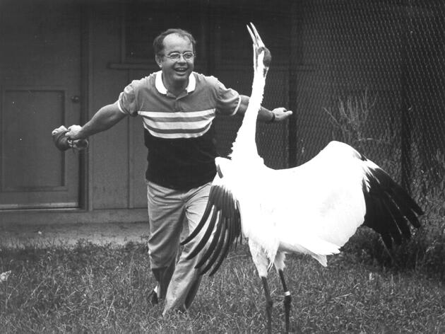 George Archibald dances with Whooping Crane Gee Whiz, son of Tex. Courtesy of the International Crane Foundation