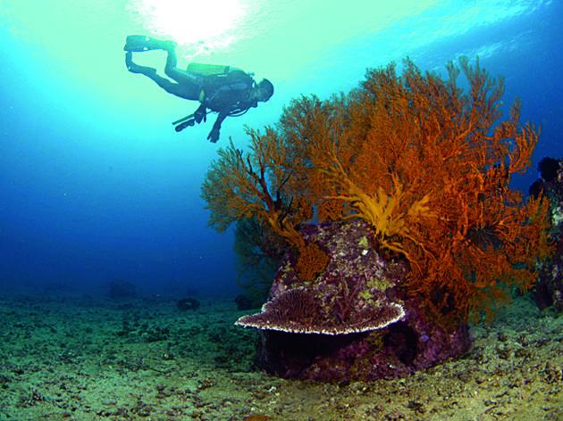 Green Guru: How Eco-friendly Are Reef Ball Burials?