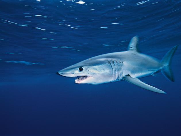 Saving Sharks From Finning