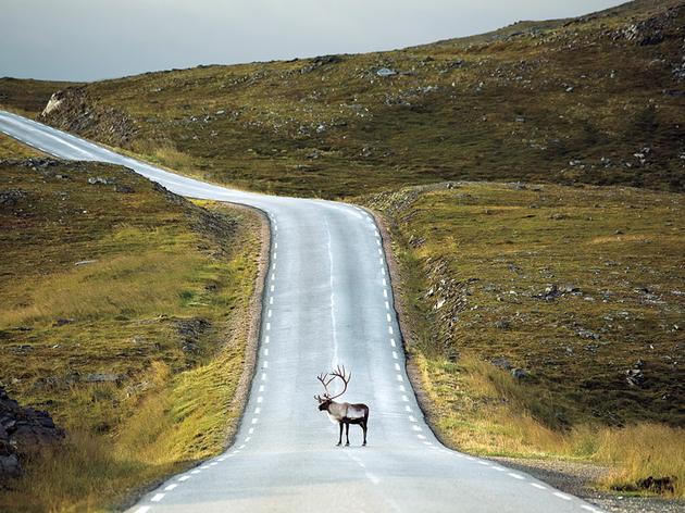 Saving Wildlife on U.S. Roads