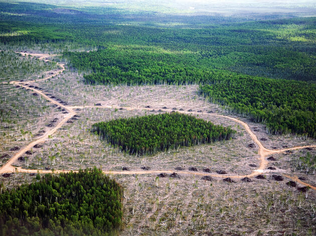 In some parts of Ontario's southern boreal, forest companies have experimented with logging in a variety of special configurations. Photograph by Per Breiehagen