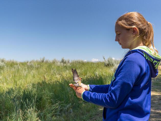 Bird Banding at 12 Years Old
