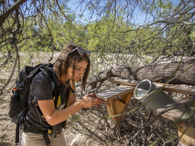 Los habitantes de Arizona ayudan a la curruca de los desiertos a expandir sus opciones habitacionales