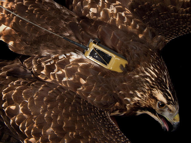 Tracking Birds' Migration Paths, Online