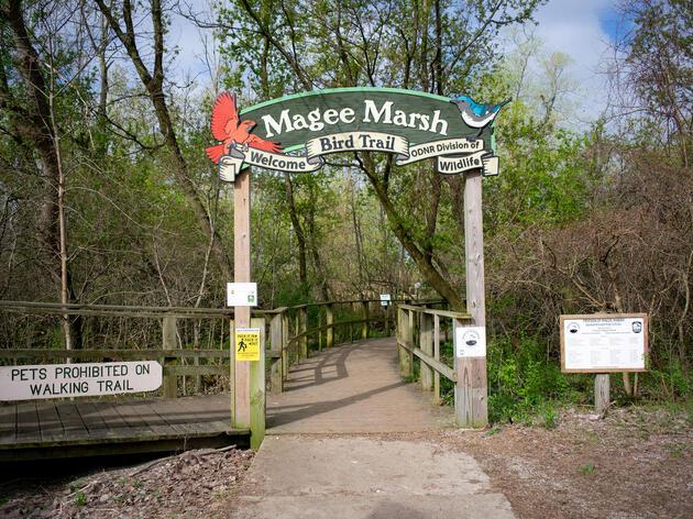 The Magee Marsh Boardwalk, where birders flock every spring during the Biggest Week in American Birding. Lia Bocchiaro/Audubon
