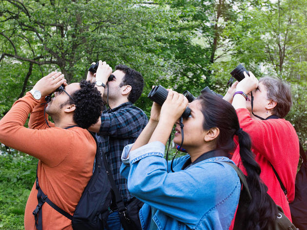 Use Your Birding Skills to Support Audubon's Newest Community Science Program