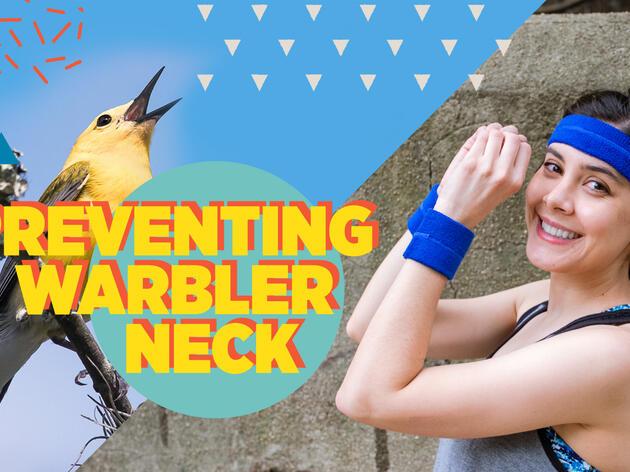A Birder's Workout Guide for Preventing Warbler Neck