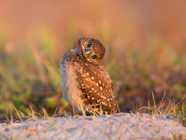 Did Somebody Say Baby Bird Photos?