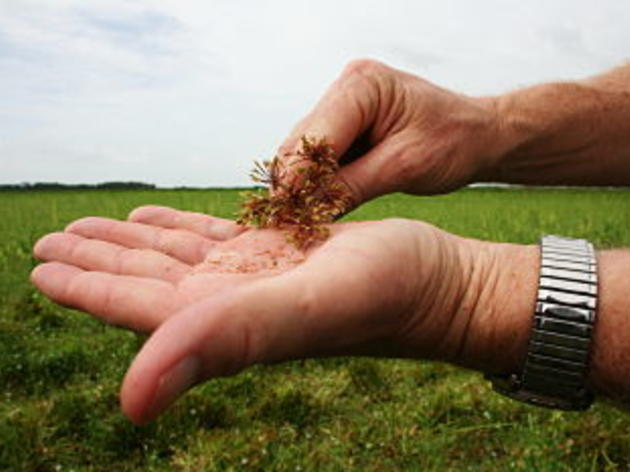 Oil spill update from the field: Can rice fields help prevent Gulf birds from getting oiled?