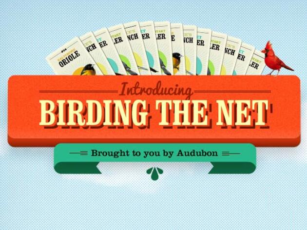 Innovative social media campaign from Audubon takes birding online