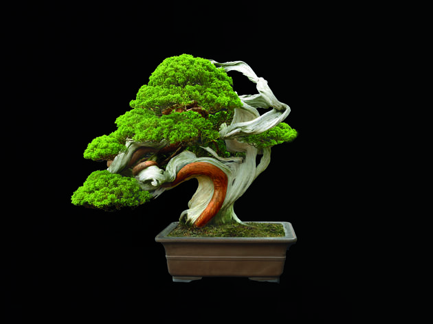 The Fine Art of Bonsai